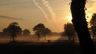 Lichtspiele - morgens beim Rinder Zählen; Bergenhusen, Stapelholm (25)