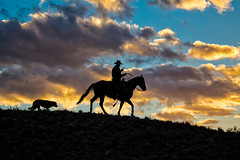 Friends Heading Home (blackhawk32) Tags: hideout hideoutlodge wyoming cowboy horse sunset silhouette shell shellwy
