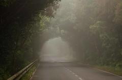 Carretera hacia lo desconocido (inma F) Tags: taborno anaga arbol bosque calle carretera cielo fog forest mist montaña nature niebla paisaje road tunel wood