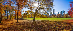 When New York rolls out the red carpet (Explored) (*ScottyO*) Tags: ny usa america centralpark newyork nyc landscape panorama pano autumn fall city cityscape buildings towers skyscrapers sky sun sunburst sunshine trees leaves branches foliage grass red green blue yellow orange carpet nature forest shadows outdoor daytime