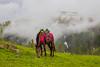 Paye Meadows (mimalkera) Tags: kaghanvalley naran kaghan shogran siripaye payemeadows lakesaifulmalook travelpakistan travelbeautifulpakistan travel wanderlust