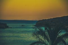 DSC_3142 (Petros Bozenko) Tags: beach ocean sea ocan palm tree summer island crete