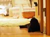 looking back (matsugoro) Tags: olympus digital pen epl2 zuiko 50mm myroom cat animal
