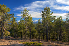 pike-national-forest-2017-hdr3-flickr (Wildsight Photography) Tags: pikenationalforest colorado woodlandpark rampartrange mountains pikespeak trees sky clouds pine