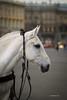 Horse in city centre (VladimirTro) Tags: canon city horse russia russian saintpetersburg outdoor europe россия санктпетербург 500d eos dslr street dof bokeh photo photography 85mm