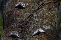 Borboletas (Rita Barreto) Tags: borboletas insetos fauna natureza itatiba estadodesã£opaulo brasil estadodesãopaulo