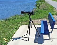newlens setup tamron150600mm nikond4s manfrototripod... (Photo: Vidterry on Flickr)
