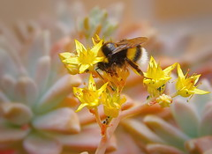 Springtime (Behappyaveiro) Tags: spring flowers bees portugal europe nature