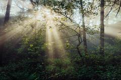 Light Shower (J C Mills Photography) Tags: peakdistrict mist light spring lumsdale matlock trees wood woodland rays landscape derbyshire uk england