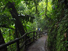 Costa Rica, rain forest