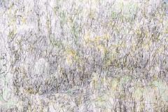 JARDINS (Touristos) Tags: galeries nationales grand palais environnements sonores et olfactifs cézanne fragonard jardins klimt matisse monet peinture picasso dessins exposition installations photographies sculpture galeriesnationales grandpalais environnementssonoresetolfactifs