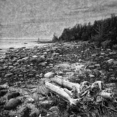 Sunset Point (craig_schenk) Tags: rugged coast line lake huron ontario canada sunset point macgregor macgregorprovincialpark sunsetpoint lakehuron ontariocanada coastline ruggedcoastline seascape beach bw blackwhite monochrome mood moody water rocky provincialpark landscape landscapes texture travel textureoverlays trees forest fineart iphone iphone5s iphoneography iphonephotography hipstamatic snapseed squarecomposition mobilephoneography