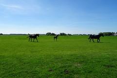 20170528 16 Den Ham - Piloersemaborg (Sjaak Kempe) Tags: 2017 lente spring sjaak kempe sony dschx60v nederland netherlands niederlande provincie groningen den ham piloersemaborg paard paarden veulen horses horse foal