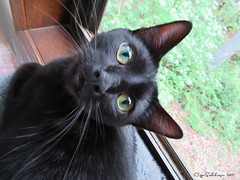 Yes Mom? (CopperScaleDragon) Tags: sam eyes cat kitty black curious