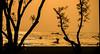 Kattoli Beach - Chittagong (Zakir_Hossain) Tags: beach locality kattoli chittagong bangladesh beautifulchittagong seabeach fisherman silhouette tree