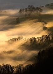 Misty mood... (Alex Switzerland) Tags: switzerland schweiz landscape fog nebbia outside mountain alps berge svizzera canon eos 6d mist tree morning light sun sonne landschaft