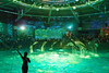 DSC02075 (Jun.Ohashi) Tags: aquaparkshinagawa aquarium shinagawa アクアパーク品川 品川 水族館 港区 東京都 日本 jp sony ソニー ilce9 α9 sonyalphaa9 a9 alpha9 tamronspaf2875mmf28xrdildasphericalifmacroa09 tamron タムロン sp 2875mm f28 di ld aspherical if macro a09