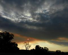 After the fire, smoky sunset (LeelooDallas) Tags: western australia bannister landscape sunset eucalyptus sun tree bush sky cloud dana iwachow nikon s9200