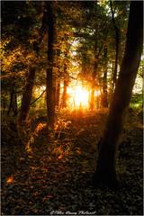 Luxpictura (Peter Daum 69) Tags: landschaft landscape natur nature licht light sonnenaufgang sonnenuntergang sunset sunrise color farbe lightpainting eos canon 6d scenery moods romantik magic magie forest tree dream rays strahlen