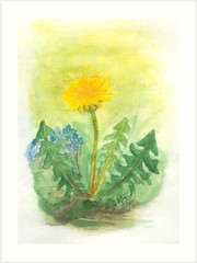dandelion (ju-friedrich) Tags: watercolor watercolour aquarell