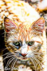 20170520_12425101-Edit-2.jpg (Les_Stockton) Tags: fractalart art cat feline fractal fractalius pet beggs oklahoma unitedstates us