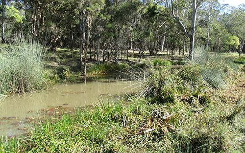 926 Clarence Way, Whiteman Creek NSW 2460