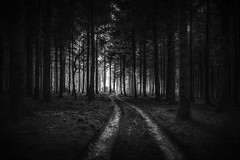 Along the Track at Idless Cornwall UK (paulbnashphotography.com - Sharpe Shooter) Tags: idless cornwall uk england wood woods forest black white dark erie scary darkness creepy track tracks