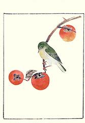 Japanese persimmon and Japanese white-eye (Japanese Flower and Bird Art) Tags: flower persimmon diospyros kaki ebenaceae bird whiteeye zosterops japonicus zosteropidae nihonga woodblock picture book japan japanese art readercollection