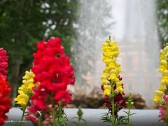 Zrinjevac flowers