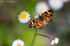I Dreamed I Was A Butterfly (Glotzsee) Tags: