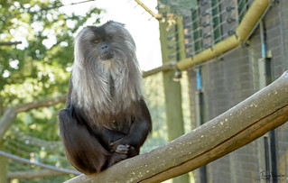 The Funky Gibbon