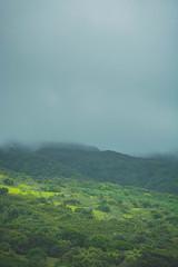 Stormy Fog (Kou Thao) Tags: animals nature wildlife hawaii scenery photograhy kokohead adventure vintage vibes tropical airplane sky sunset clouds traveler luau horse jungle fog