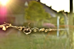 Tangled... (Maria Godfrida) Tags: fence fences hff fencedfriday landscape light sun sunlight colours colors blur bokeh wire tangledwire barbedwire tangled knot fluffy plush 7dwf
