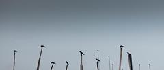 Territory. (nshrishikesh) Tags: marina marinabeach crows birds photography photographer cinematic crop 2351