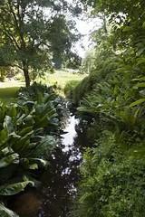 2017-06-18 Virginia Water Savill Gardens IMG_9141 (Darkstar Moody) Tags: virginiawater savillgardens plants flowers trees water ponds lakes wildlife gardens flora fauna