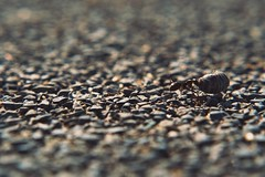 Ant at Work (Jon-Fū, the写真machine) Tags: ant ants 蟻 macro マクロ macrofilter macrofilters マクロフィルター jonfu 2017 olympus omd em5markii em5ii em5mkii em5mk2 em5mark2 オリンパス mirrorless mirrorlesscamera microfourthirds micro43 m43 mft μft マイクロフォーサーズ ミラーレスカメラ snapseed japan 日本 nihon nippon ジャパン ジパング japón जापान japão xapón asia アジア asian orient oriental aichi 愛知 愛知県 chubu chuubu 中部 中部地方 nagoya 名古屋 港区 minatoku minatoward 名古屋港 名港 nagoyaport portofnagoya animal animals 動物 生き物 fauna bug bugs 虫
