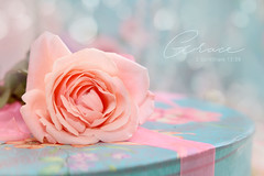 Grace (Juavenita ♥) Tags: bible quote grace flower rose petas background pastel dreamy