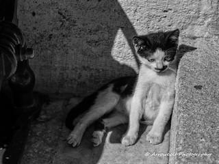 Cat 31