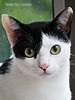 Loki (Brunna PL) Tags: catcloseuppetanimalcanon challengeyouwinner cyunanimous brunnaperettiloureiro canon photographer bestshot cat cy2