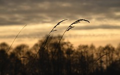 Sunset (careth@2012) Tags: scene scenery scenic view silhouette atmospheric sunset