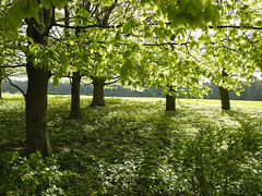 The Green woods laugh with joy (Lancashire Lass :) :) :)) Tags: quote nature landscape trees wood green sunlight shadow dappledlight april alston lancashire ribblevalley countryside spring
