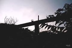 苗栗三義小旅行紀實 (li zhong) Tags: all 苗栗 三義 喆娟夢田 勝興車站 龍騰斷橋 鴨箱寶