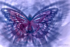 Butterfly (CaBAsk! on and off. Thank U for the visit ♥) Tags: abstract art butterfly movement lumia digital manipulation photoshop pink blue magenta mountains wings freedom expression norway