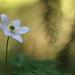Spring White 12