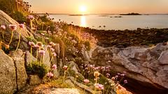 Couché de soleil landéda (Arnaud Regnier) Tags: pentax k50 paysage penenez landscape landéda landeda sunrise soleil mer 1020 1020mm sigma flower fleur coucherdesoleil