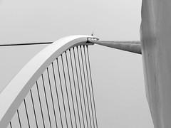 Samual Becket Bridge Dublin 31-05-2017 002 (gallftree008) Tags: a the liffey river dublin city ireland convention reflection 31052017 002 kennedys bar squirrel tara street st john rogersons quay building samual becket bridge photos photo photowalk customed roofed rail column 001 admiral william brown south quays