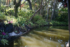 """Walt Disney World: Jungle Cruise • <a style=""""font-size:0.8em;"""" href=""""http://www.flickr.com/photos/28558260@N04/34365536690/"""" target=""""_blank"""">View on Flickr</a>"""
