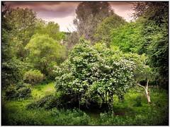 naturbelassen (almresi1) Tags: waiblingen remstal wood wald bäume baum tree nature green blüten blossom talaue germany deutschland