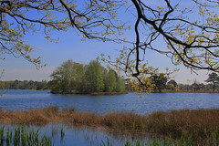 Lakes at spring