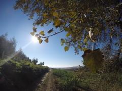 (Matteo Bimonte) Tags: viafrancigena francigena toscana tuscany